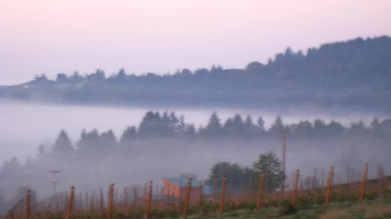 Dundee Manor Bed and Breakfast: Fog over the Valley from the Porch