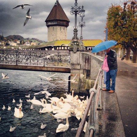 Lake Luzern: Озеро Люцерн. Обед.