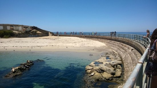 La Jolla Cove : Beautiful!