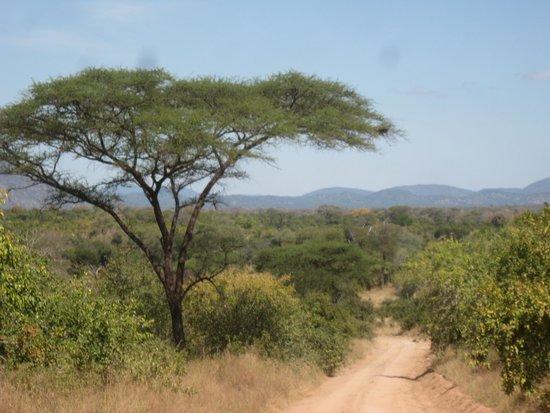 Ruaha River Lodge: African bushveld
