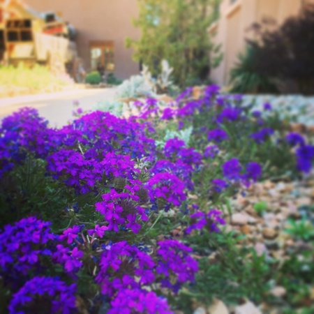 Hyatt Regency Tamaya Resort & Spa: Gorgeous flowers and landscaping