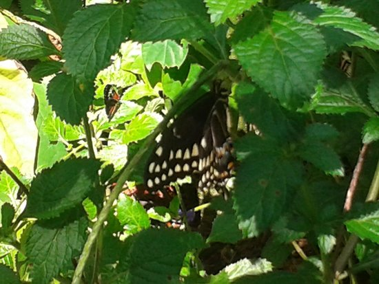 Butterfly World : One of the many pretty butterflies hanging about