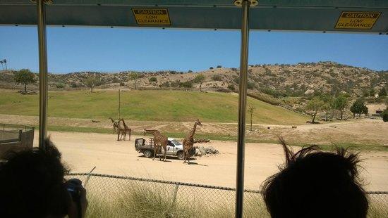 San Diego Zoo Safari Park: Wonderful Visit!