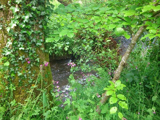 Cae Hir Gardens: Lower water garden.