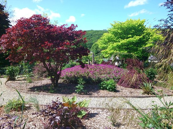 Cae Hir Gardens: Contrasting colours in the upper garden