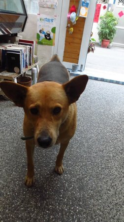 Susu Guesthouse: 犬も自由に行き来