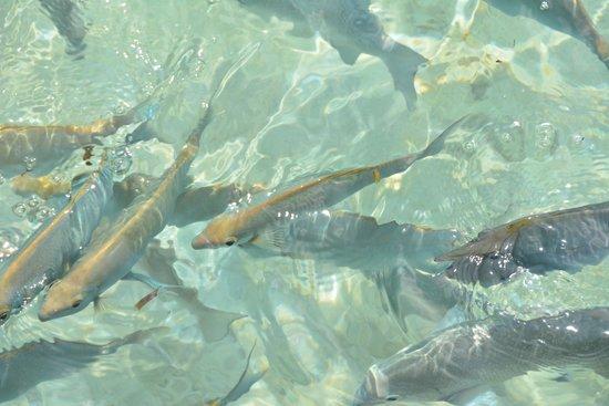Kurumba Maldives : Вода настолько прозрачна, что рыбок можно наблюдать не прогружаясь