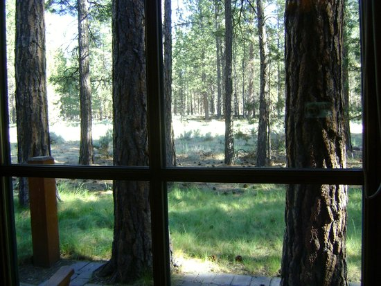 Five Pine Lodge & Spa : View from the back door.
