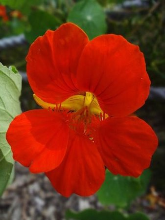 Perth Zoo : Flower