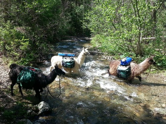 Wild Earth Llama Adventures: Crossing one of 3 streams during our hike.