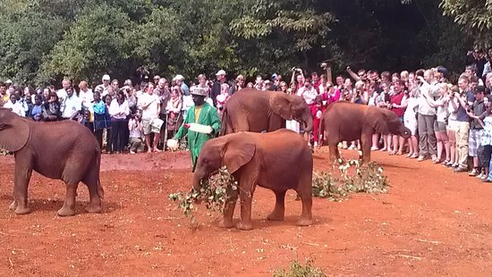 David Sheldrick Wildlife Trust : The crowds