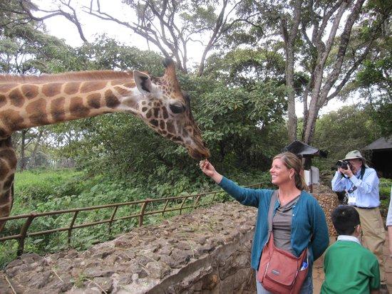 African Fund for Endangered Wildlife (Kenya) Ltd. - Giraffe Centre: Easy feeding