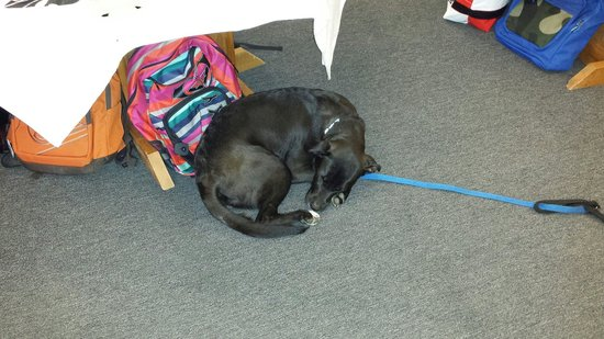 Corolla Surf Shop: This is Dillon the surf shop dog.