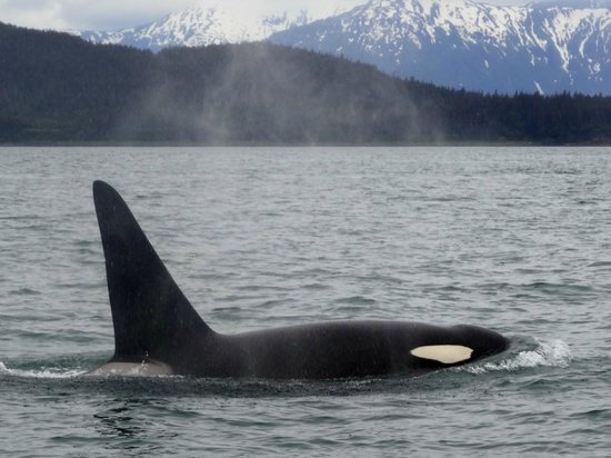 Harv and Marv's Outback Alaska: Whale watching with Captain Jayleen