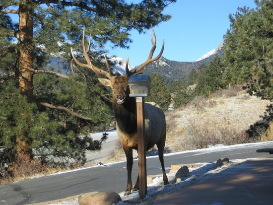 McGregor Mountain Lodge: Elk at bird feeder