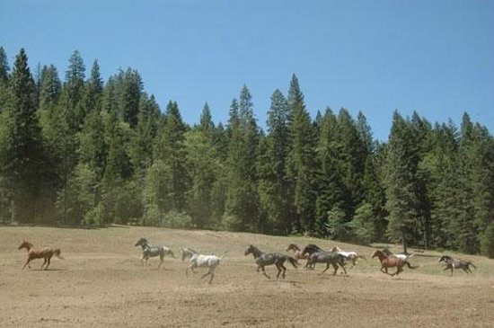 Coffee Creek Ranch: Our horses excited to start the day!