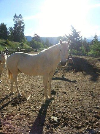 Tyax Wilderness Resort & Spa : Horses