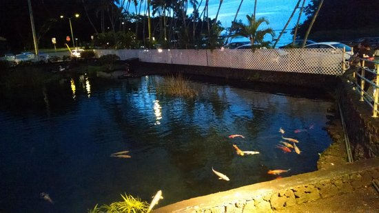 Hilo Seaside Hotel: Coy Pond