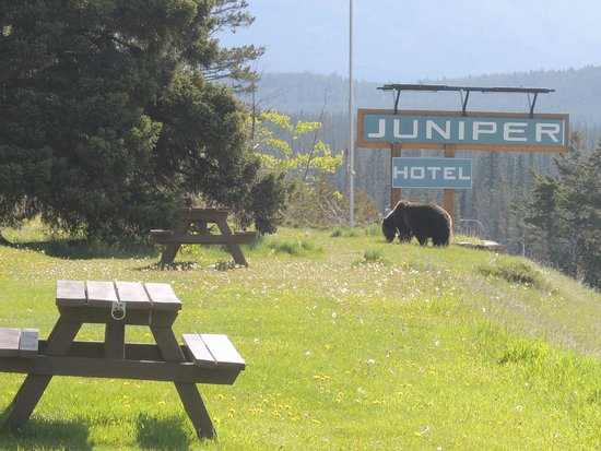The Juniper Hotel: That was our visitor in the morning we check out.