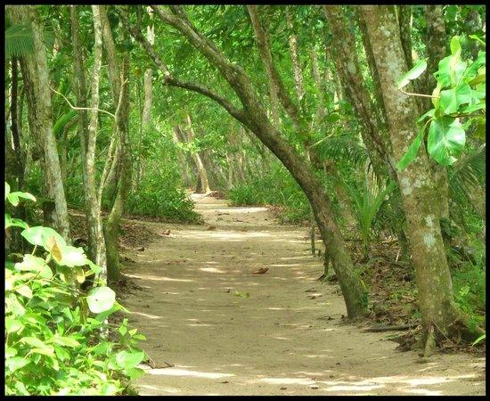 Cahuita National Park: Cahuita