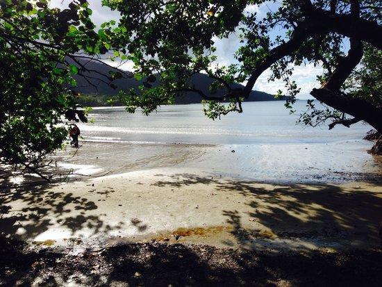 Ferntree Rainforest Lodge: Cape trib beach.