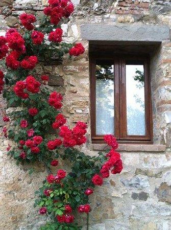 Fattoria Tregole: Edith's Roses