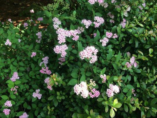 Edith J. Carrier Arboretum: Pretty little flowers