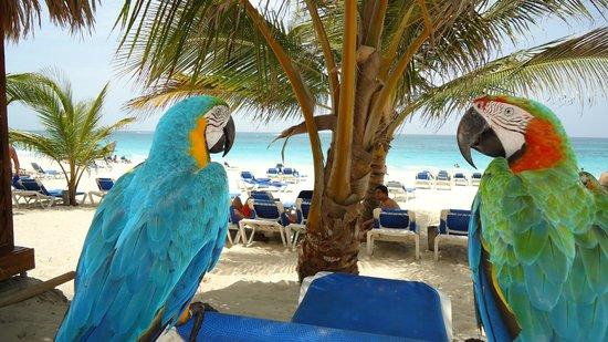 Occidental Caribe : Mascotas