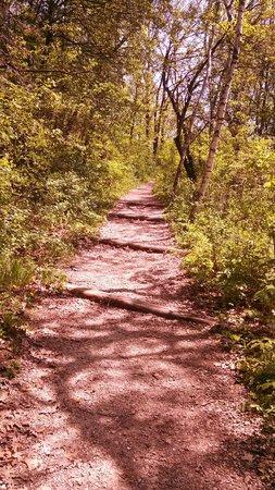 Indian Lake Park: Trail- Shot 2