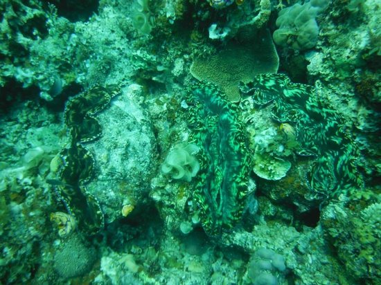 El Nido Resorts Apulit Island : Snorkeling