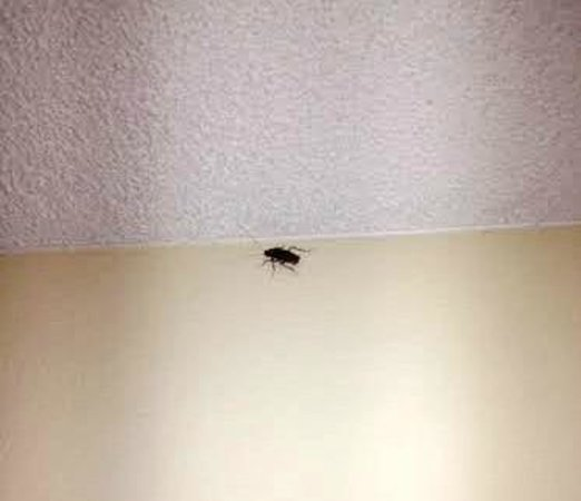 Americas Best Value Astoria Inn and Suites : Cockroach crawling the bedroom wall