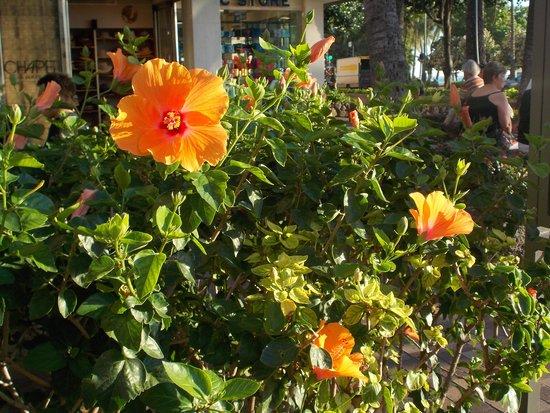 Waikiki Sand Villa Hotel: so many gorgeous flowers all around