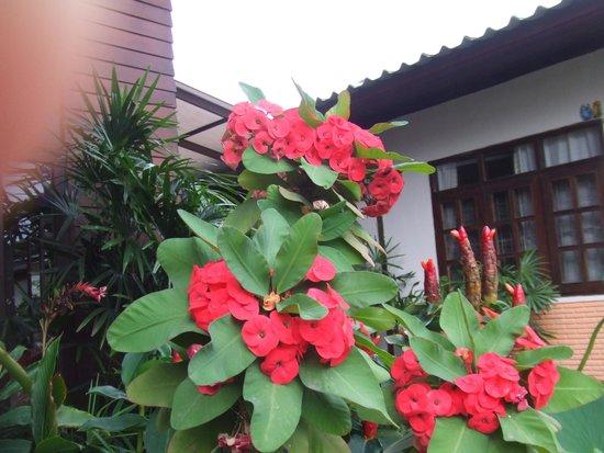 Baan Pai Nai Wieng : 入口のきれいな花