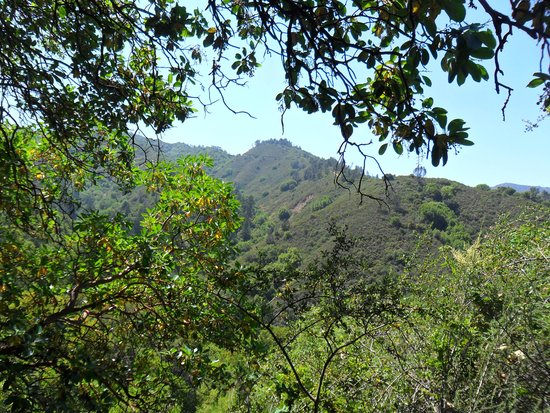 Uvas Canyon County Park: view from top of the Contour Trail