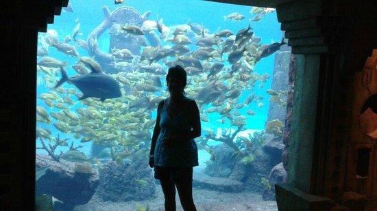 Marine Habitat at Atlantis: Soo many fish - a bit overstocked