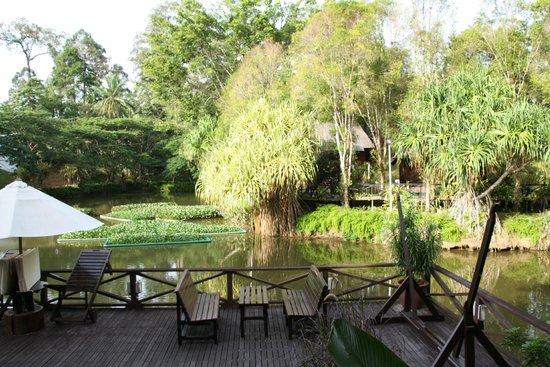 Sepilok Nature Resort: view from breakfast