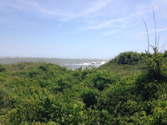 Folly Beach Public Beach: Morris Island State Park
