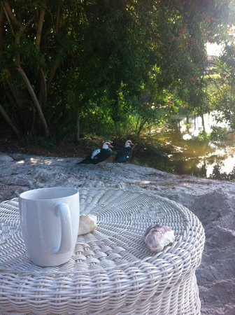 Marco Island Lakeside Inn: Enjoying morning coffee with duck family.