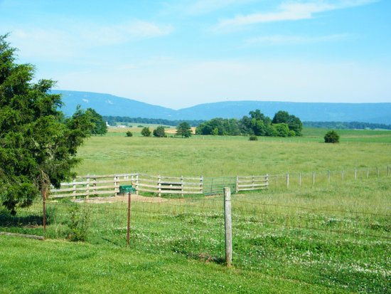 Piney Hill Bed & Breakfast : View from our porch