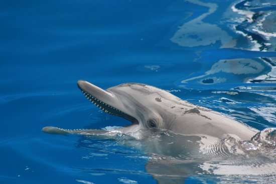 Clearwater Marine Aquarium: Smile!