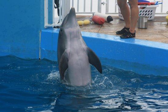 Clearwater Marine Aquarium : Nicholaus