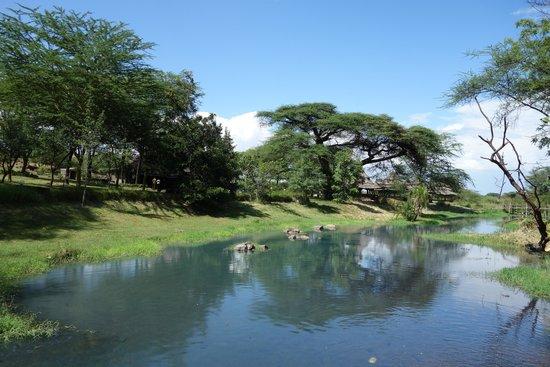 Lake Bogoria Spa Resort: 広大な敷地