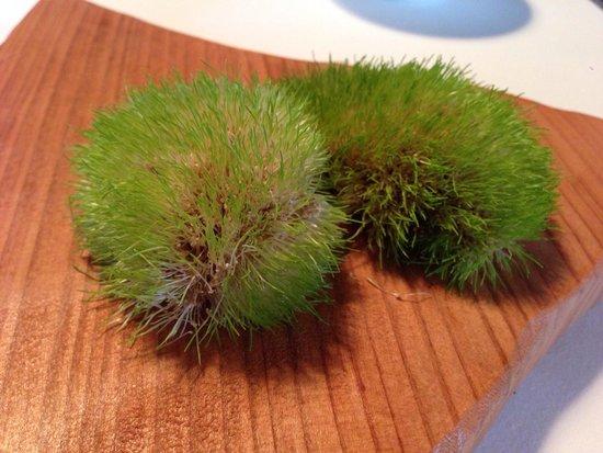 Mugaritz: Edible grass