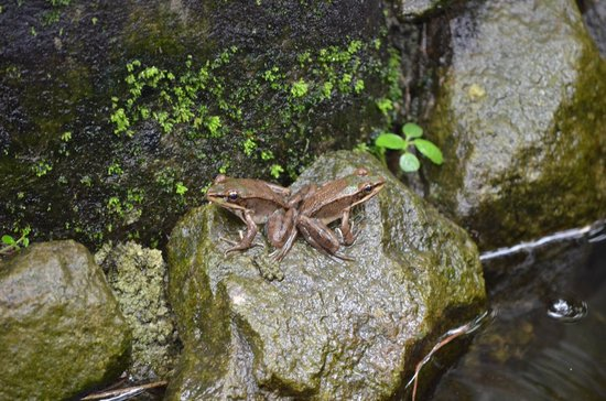 Arenal Natura Ecological Park: Frogs