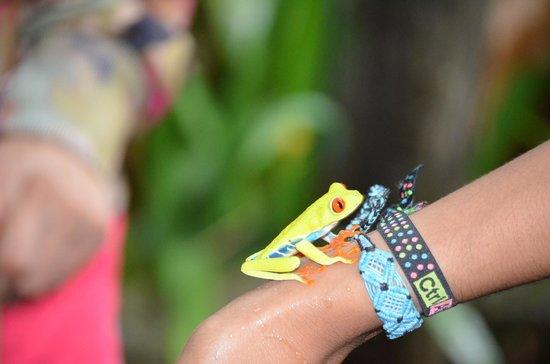 Arenal Natura Ecological Park: Frog