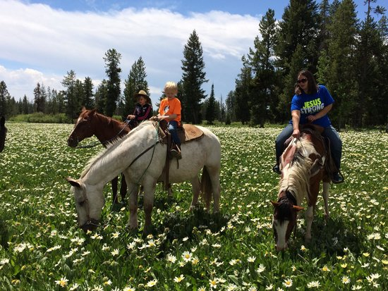 Yellowstone Horses - Eagle Ridge Ranch : Field of Daisies
