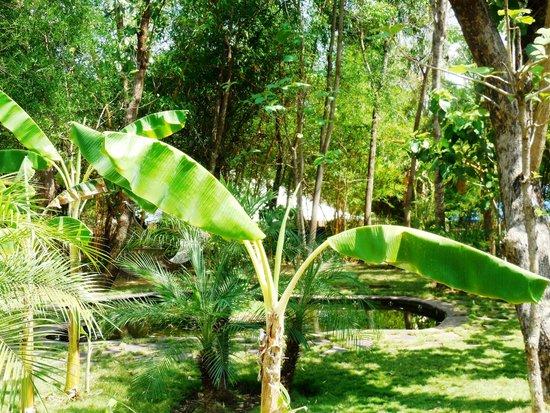 Tuli Tiger Resort: beautiful grounds