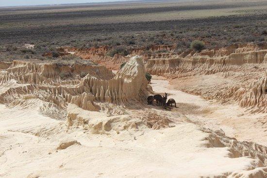 Mungo National Park: Sand Dunes