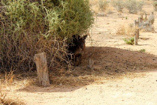 Mungo National Park: Looking for some shed in hot summer day