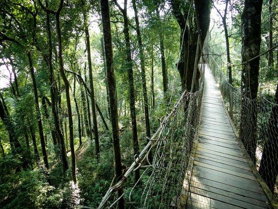 Canopy Walk Lolegaon & Canopy Walk Lolegaon - Picture of Canopy Walk Loleygaon - TripAdvisor